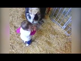 20 животных, отомстивших детям (Vine Video)