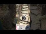 Macaco atira coc