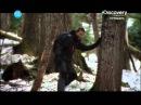 Беар Гриллс По стопам выживших 1 сезон 2 серия горы Канады
