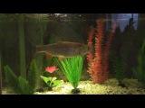 кормление аквариума (дендробена VS плотва, голавль, густера)