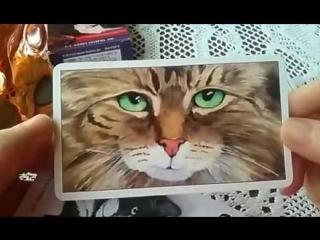Таро Кошачий Взгляд Cat's Eye Tarot ОБЗОР