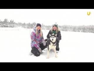 Глазами животных, выпуск 262 (Соревнования по зимним дисциплинам ездового спорта «ЛЕСНАЯ СКАЗКА 2017», часть 2)