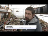 Евгений Аксёнов и его кактусы