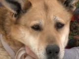 Бездомные животные ищут хозяев: собака Ероша и кошка Мелисса