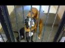 Собаки обнимали друг друга перед эвтаназией, и это спасло им жизнь