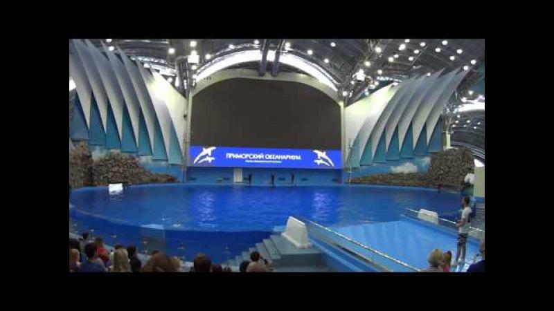 Приморский океанариум Дельфины Dolphins bottlenose