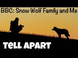Фразовый глагол to TELL APART из передачи BBC Snow Wolf Family and Me