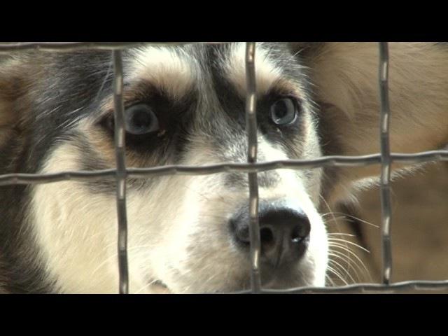Чернівецький репортер завітав до притулку для тварин