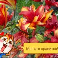 Анкета Алёна Еремеева