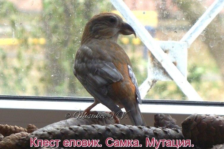 Фотографии моих птиц  - Страница 4 Gbyg_W6PXRY