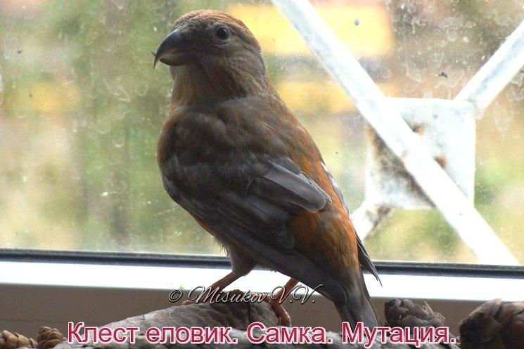 Фотографии моих птиц  - Страница 4 P2cvIfsAaKg