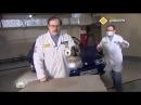 УДАЛЕНИЕ ЗАПАХОВ по технологии Сухой туман в ТВ передачи Главная дорога