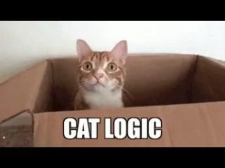 Построил дом для котов или Кошачья логика