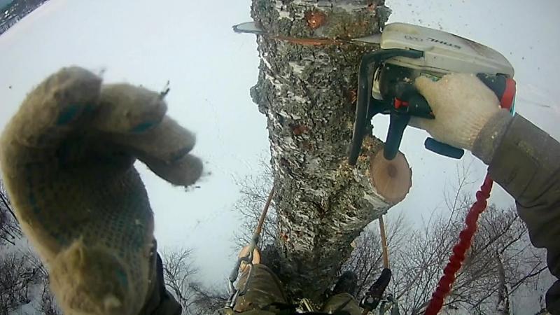 валка деревьев частями