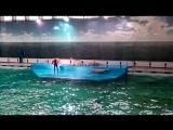 Шоу в Санкт-Петербургском дельфинарии на Крестовском ч 1