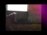 MY CRAZY HORSE