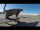 CAT AND SKATEBOARD
