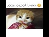 Кот Боря который любит батоны