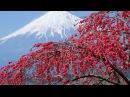 Каникулы любви Сёстры Дза Пинац 1963г Япония