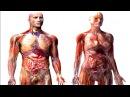 Анатомия человека Анимация