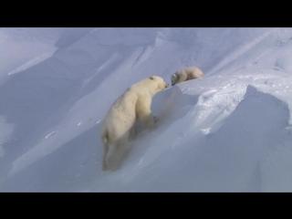 BBC: Планета Земля / Planet Earth (2006) - От полюса до полюса (From Pole to Pole) - 1