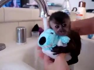 Мелкая крошка принимает ванную