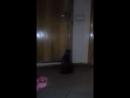 Мой кот Тимоха собирается на улицу .mp4