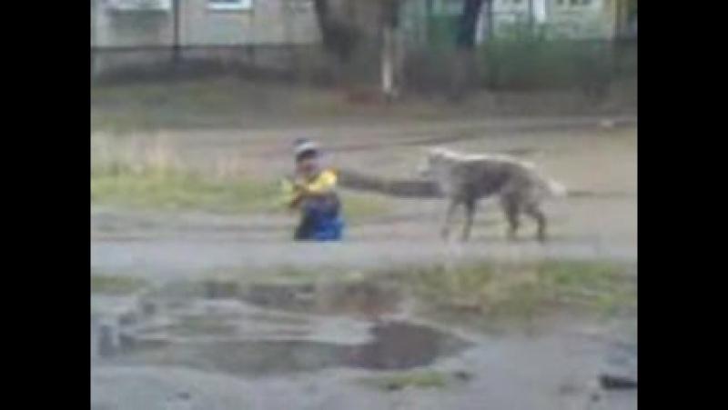 собака-ебака