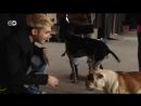 21.02.2017 - DW - PopXport - Ein Highlight während unseres Tokio Hotel-Interviews