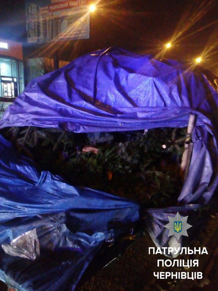 Дві автівки з нечіпованими ялинками затримали цієї ночі у Чернівцях (ФОТО)