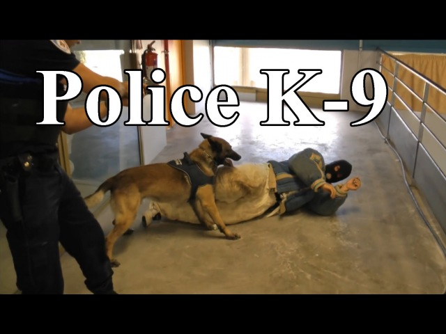 Police K-9 Unit Tactical Building Search Training and Catch Suspect. French.