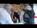 VOX hautnah die Tierklinik TrailerTV Deutschland