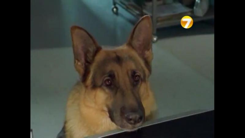 Комиссар Рекс/Kommissar Rex (1994 - 2004) Русский ТВ-ролик