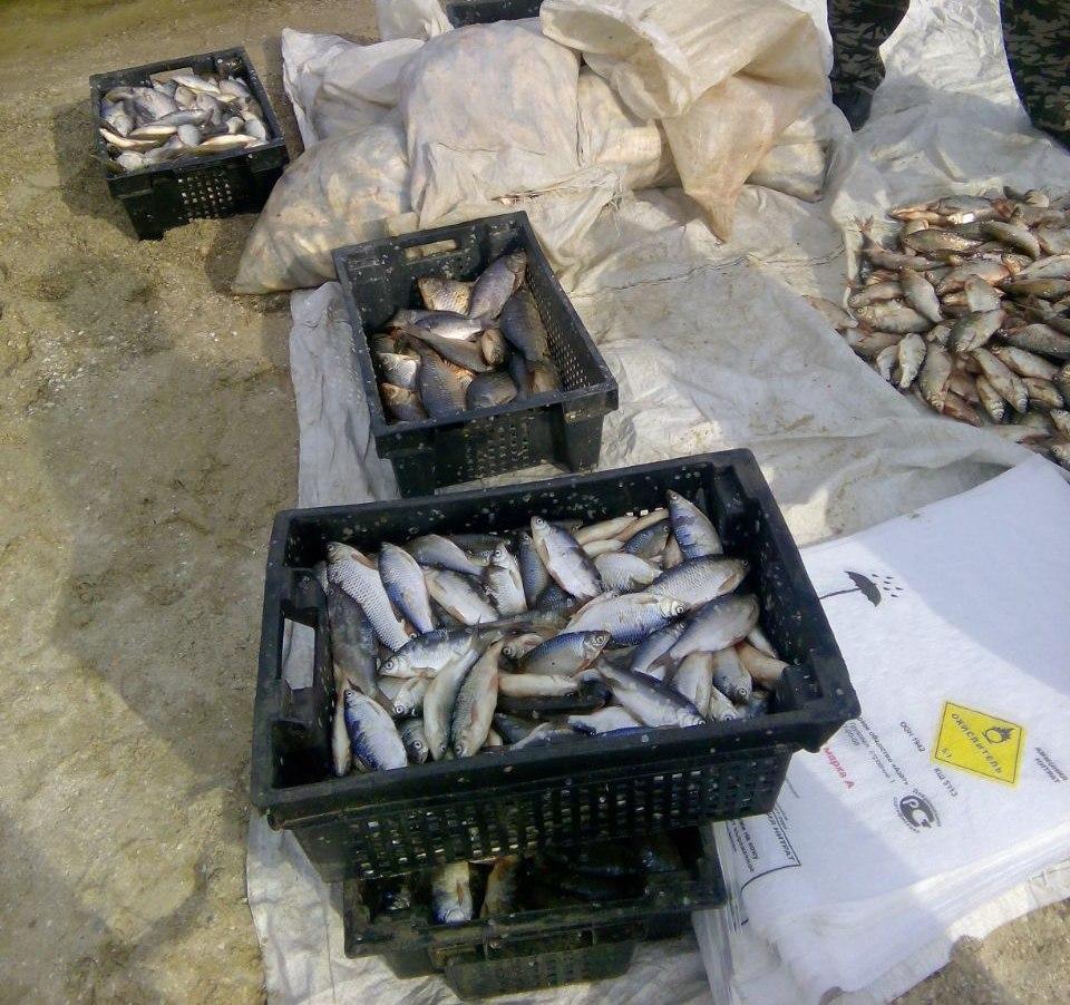 В Таганрогском заливе снова задержаны браконьеры
