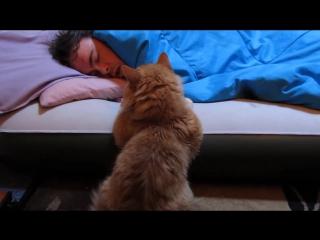 Животные пока мы спим