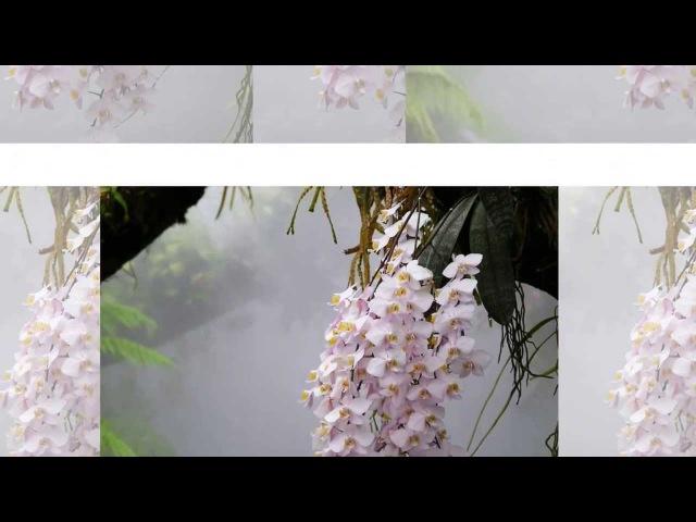 Красивая музыка и нежные цветы для Вас, мои друзья!