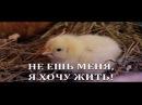 ЦЫПЛЕНОК ЖАРЕНЫЙ 2013 поет ОЛЕГ СНЕГОВ