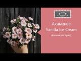 Ахименес Vanilla Ice Cream (Ванилэ Айс Крим)
