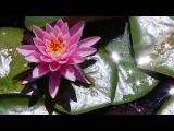 Lotus Secret Garden