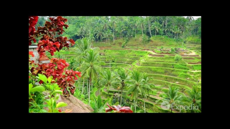 Bali Vacation Travel Guide | Expedia