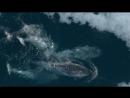 BBC Морские гиганты Голоса океанов 2011 HD 720