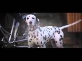 101 Dalmatians 1996 Movie Adventure, Comedy, Family Movie Glenn Close, Jeff Daniels Movie