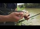 Рыбалка в Подмосковье. Ловля голавля на спиннинг и на Воблеры кренки crank видео