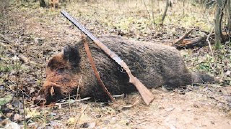 Загонная охота на кабана поздней осенью под Воронежем, Хреновской бор