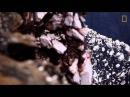 Извержение вулкана, снятое с помощью дрона / The eruption of a volcano that is captured by the drone