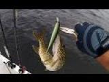 Lucky Craft Slender Pointer 127 MR при очень сильном ветре. Финские зарисовки