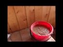 Мешанка для кур Почему мы больше не кормим птицу зерном