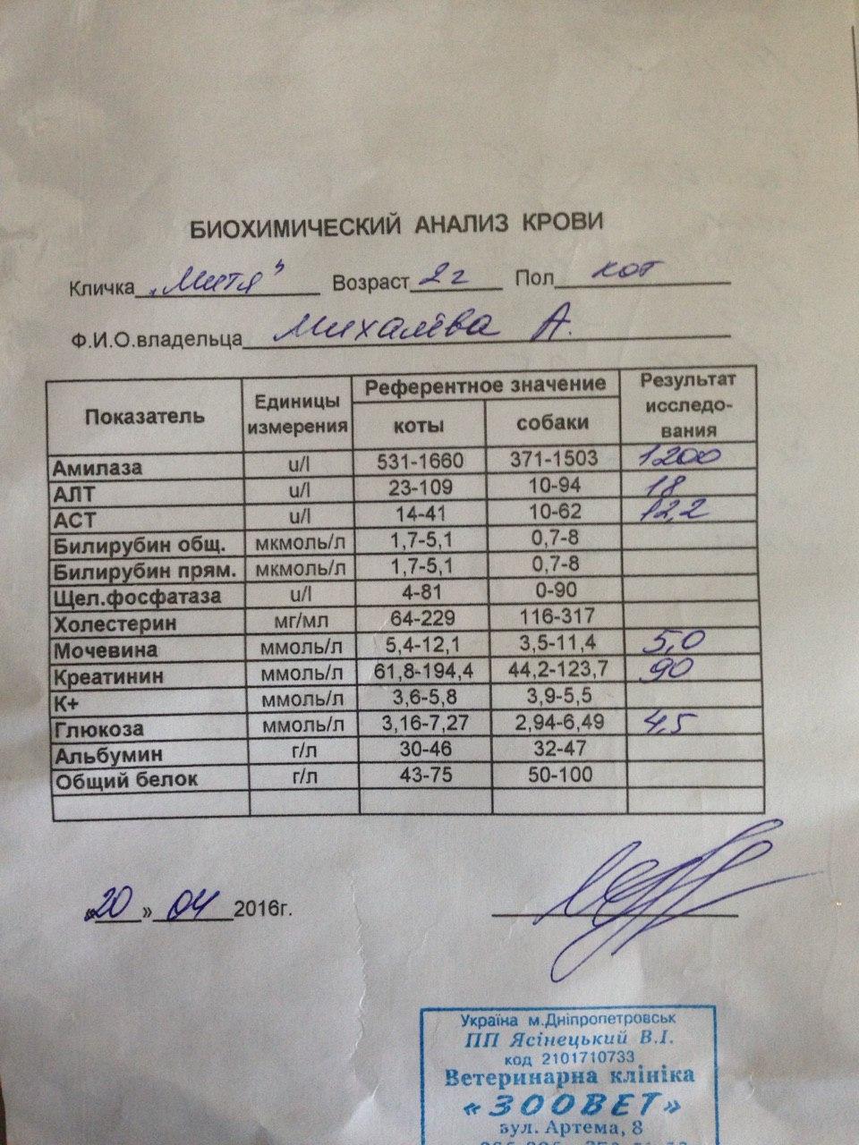 Биохимический анализ крови для беременных