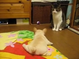 Первая охота на кота