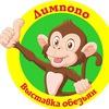"Выставка обезьян ""Лимпопо"""
